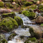 Running Water and Moss, Siderius Photo