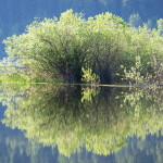 Green Reflections, Siderius Photo