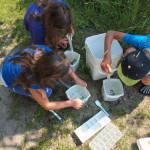 sorting the invertebrates