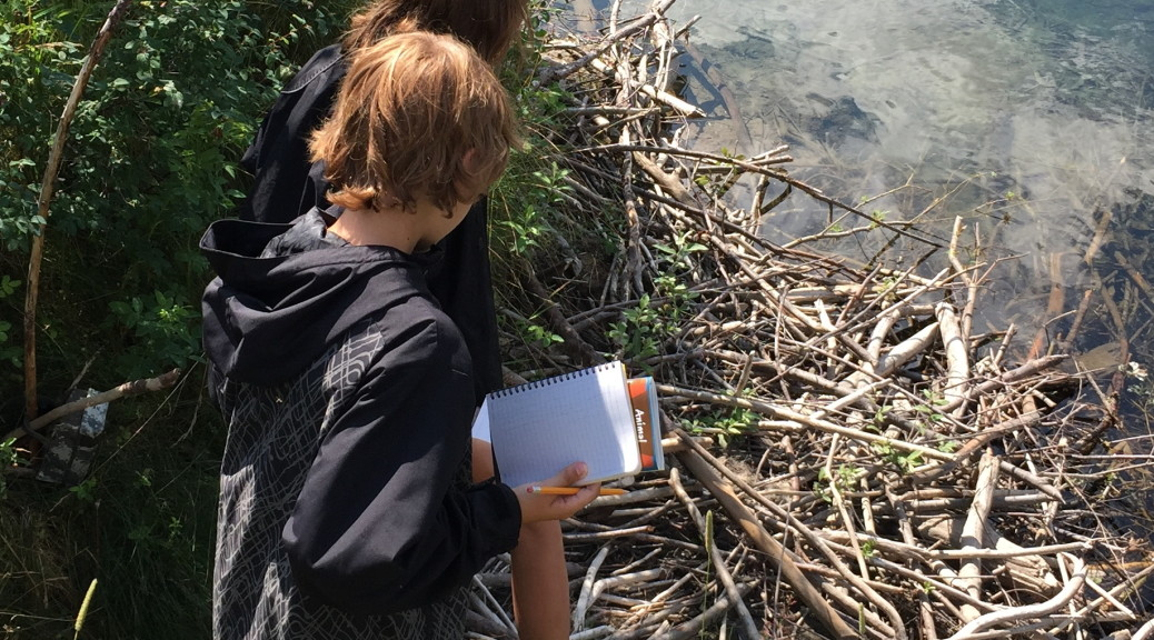 Young biologists at the beaver lodge